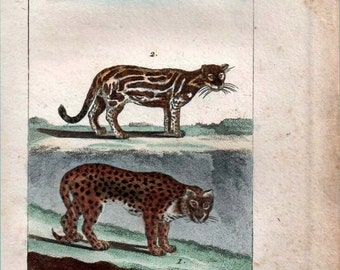 1802 Jaguar and Ocelot Miniature Animal Print Hand Colored Engraving  Buffon Natural  History Big Cats