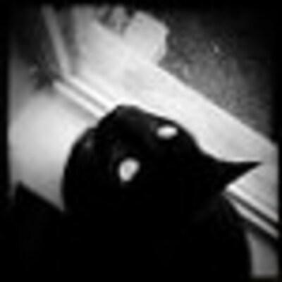 BlackCatStudio22