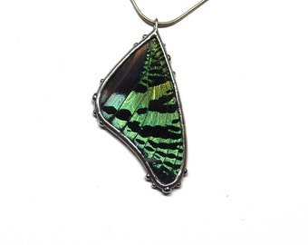 Green and Black Sunset Moth Necklace - Real Butterfly Jewelry