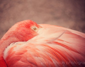 pink flamingo nursery art photography, bird photo, nature wall art, bird home decor, coral decor, animal photograph, The Resting Flamingo