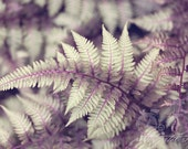 Abstract Fine Art Photograph, Japanese Painted Fern, Fern Photo, Sage Green, Lavender Hue, Plant, Nature Art, Botanical Garden, 4x6 Print