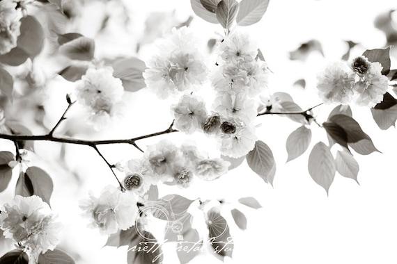 Black and White Fine Art Photograph Cherry Blossoms Branch