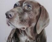 Dog Pet Portrait 5 x 7 Colored Pencil Art by Carla Kurt cat dog horse memorial