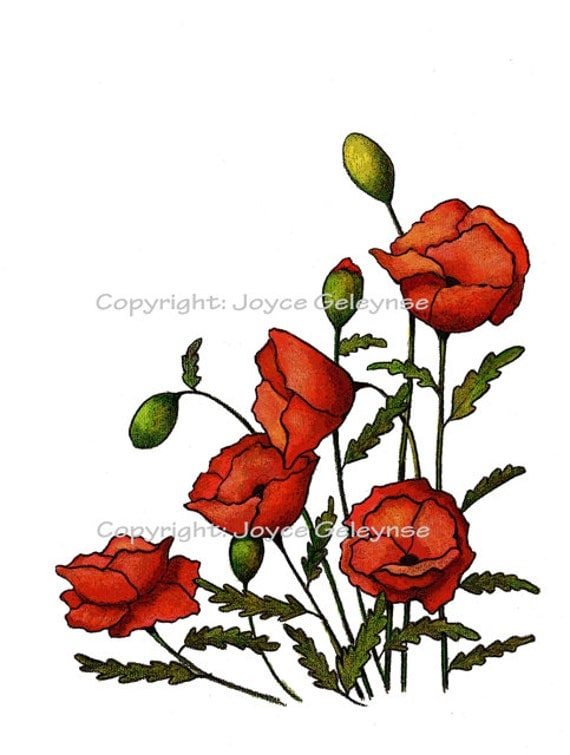 Clip Art Red Poppies Flowers Freehand Drawing
