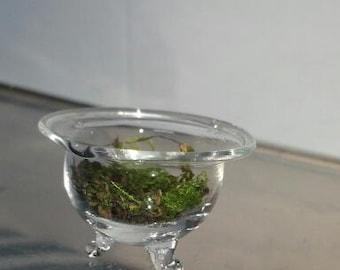 MINIATURE Glass Terrarium with Moss Hand Blown and Sculpted by Jenn Goodale