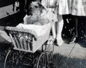 Vintage photo Children push Dog in Doll Buggy