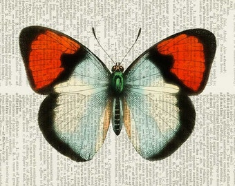 Butterfly, red and white print