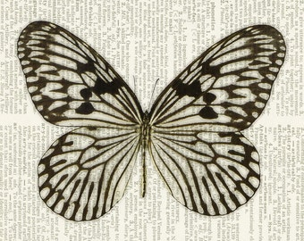 butterfly - brown and cream dictionary page print