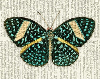 Butterfly, spotted butterfly print