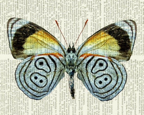 butterfly pastel blue print