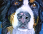 Bernese Mountain gorgeous Dog Giclee Fine Art Print or aceo card