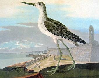 Audubon Bird Print - Greenshank  - Large 1981 Vintage Audubon Bird Book Page