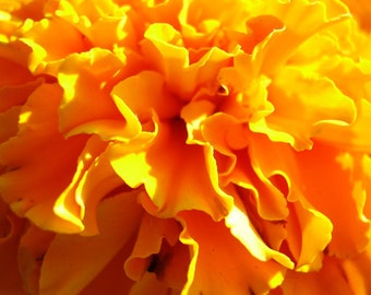 Marigold Blossom Candle Soap 4 Oz Fragrance Oil Scent Calendula - Floral Oil - Supplies - Phthalate-free - Concentrated Oils