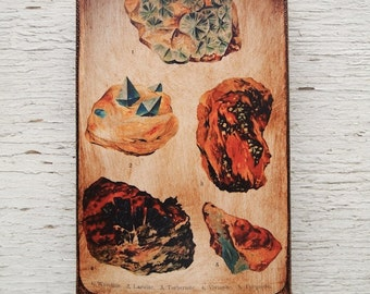 Vintage Rock & Minerals Specimens - Collection E 4x6