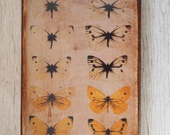 Butterflies Specimens Photo B -Wall Art