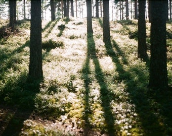 HALF PRICE SALE - Where the Long Shadows fall -  5x7 original film art photograph of the Swedish forest