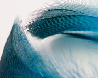 Ocean Paradise Feather Earrings, OOAK, Feather earrings, Brillant Blue, Free Shipping, Laura Mae Jewelry