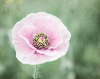 Botanical photography print pink poppy flower sage green nursery room wall art - Pale Blossom