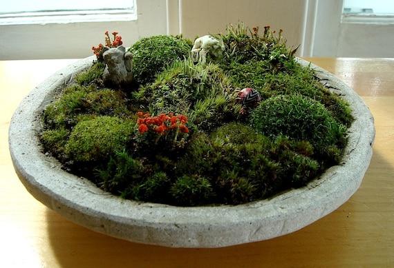 SALE Zen Concrete Handmade Moss Bowl Terrarium Centerpiece