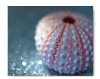 Urchin Shell Photograph Sea Urchin Print  Affordable Home Photography Prints Nature Photography Decor Sea Theme