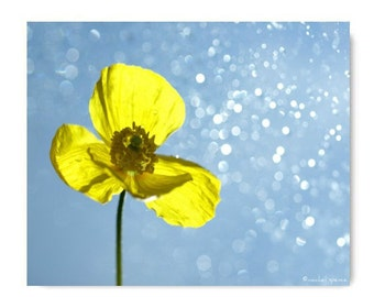 Yellow Poppy Flower Photograph Home Photography Prints Nature Photography Nature Lover Woodland Scene Flower Botany Print