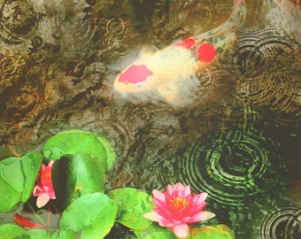 Dark rain, 16x20, Art, photography, nature, Koi art, pond art, Lotus, Lily pads, water gardens, wall art #Koi art #Koi ponds #Art #Original