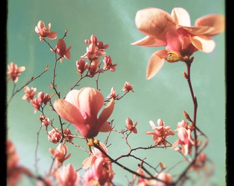 Magnolia photo, pink flowers, spring decor, floral, rose pink, mother of pearl, metallic, green, petals, women, girls