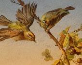 Autumn Birds & Blackberry Branch, antique German postcard Instant Download,  FrA168