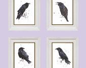 Brooding RAVEN art collection, 8x10 inch prints, set of 4 RAVEN prints, dorm decor, fall, goth, raven art