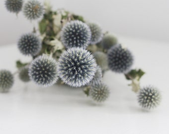 echinops thistle bunch