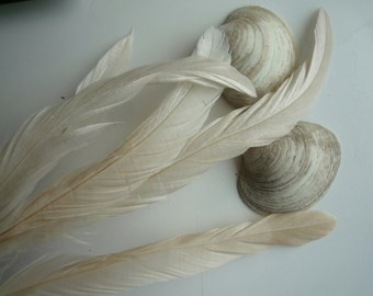 COQUE Tail Feathers,  Loose / Satin Ivory, Corn Silk  / 175