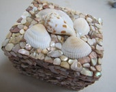 Shell box with a lid