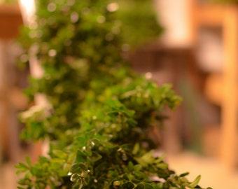 Extra Thick Fresh Boxwood Garland, boxwood garland, green garland, wedding garland, Christmas garland, fresh greenery