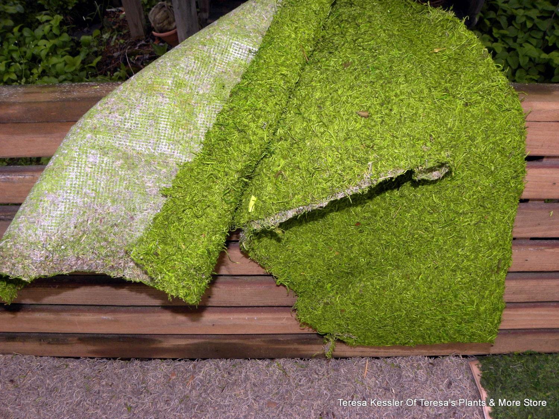 Moss Mats Moss Table Mats Images Reverse Search