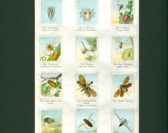 Antique 1900 Flying Insect Sticker Album Print