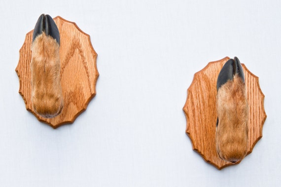Taxidermy Deer Hoof Foot Feet Gun Rack on Beautifully Finished Oak Plaques