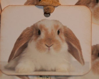 Brown and White Bunny Tags