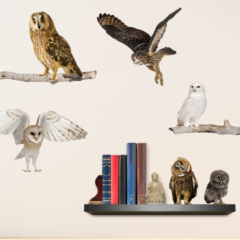 realistic owls wall decals. Black Bedroom Furniture Sets. Home Design Ideas