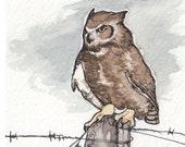 Great Horned Owl - Fine Art Print