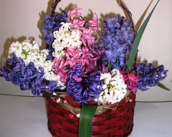 HYACINTH  BULB BASKET/ Fragrant Hyacinth Bulb/ Ready to Grow/ Valentine's Day Gift, Gift for Him, Plant Lovers Gift