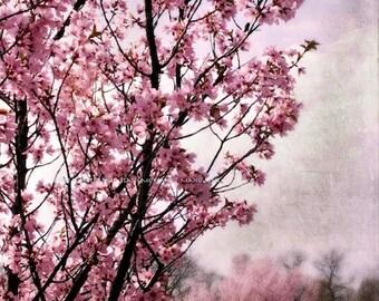 PINK BLOSSOM SPRING Original Color Art Photograph