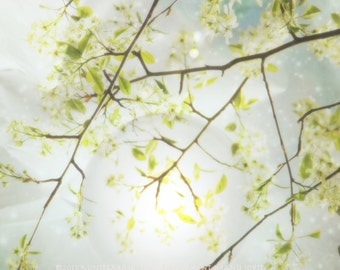GLOW BRANCH Dreamy Light Color Orginal Art  Photograph by StaticMovement