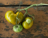 Lime Salad Tomato Seeds - Naturally and Organically Grown Rare GreenTomato Seeds