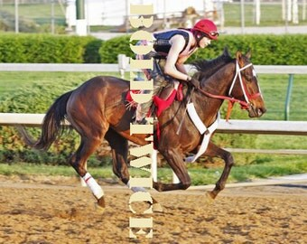 Kentucky Derby Fever strikes Bold Twice Fine Art Photograph 8 x 10 inches