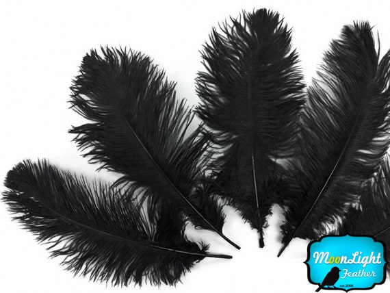 Black ostrich feathers - photo#16