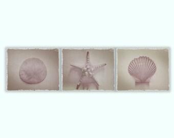 Set of Three, Starfish, Sand Dollar, Shell Natural Beige Beach Art Textured 8x10 Photographs, Home Decor, Wall Art, Sea, Ocean