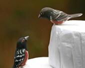 Towhee Love Birds Wedding Cake Topper