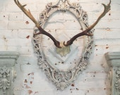 Painted Cottage Chic Shabby Farmhouse Deer Antlers HD31
