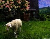 Animal art photography, sheep, old barn, rural farm life, wool, pink flowers, springtime, stars, surreal fractal art