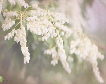 White flowers photograph - Spring Romance  fine art print- shabby chic, home decor, dreamy, white, green, pink, nature, romantic country